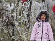 [Fotos] Bellas imagenes de plantas heladas en paso O Quy Ho