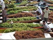 Indonesia, gran proveedor de algas del mundo