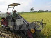 Vietnam y Japón robustecen cooperación en agricultura