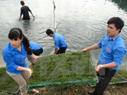 Da Nang y Salavan incrementan cooperación juvenil