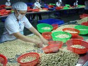 Trasiego comercial Vietnam-Canadá muestra señales positivas