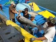 Firma nipona interesada en industria de atún oceánico vietnamita