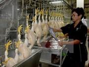 Vietnam adopta medidas para elevar competitividad de ganadería