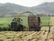 Incentiva Vietnam participación empresarial en renovación rural