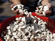 Exportaciones de moluscos totalizarán 85 millones USD