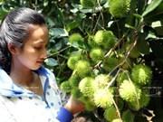 Hoteles, canal promocional de frutas vietnamitas