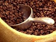 Pronostican baja productividad de café en cosecha 2015-2016