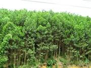 Agricultor vietnamita enriquecido por acacia y camarones
