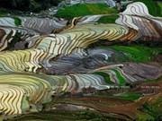 La belleza de las terrazas de Mu Cang Chai