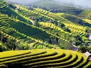 Evento cultural honra a pintorescas terrazas de arroz de Hoang Su Phi