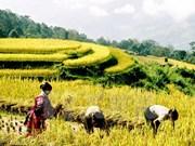 Comienza Semana de Cultura y Turismo de Terrazas de Hoang Su Phi