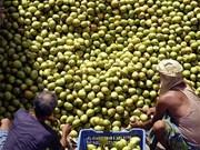 Estudia Dong Nai técnicas japonesas del cultivo de mango
