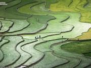 Foto de terrazas vietnamitas entre las más bellas de concurso mundial