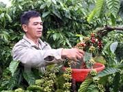 Disminuyen exportaciones agroforestales y pesqueras vietnamitas