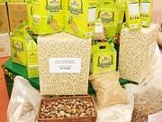 Exportación vietnamita de anacardo registra notable incremento