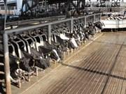 Indonesia reanuda importaciones de ganado de Australia