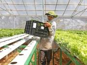 Vingroup invierte en agricultura con alta tecnología en Quang Ninh