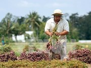 Vietnam incumplirá meta para exportaciones agrícolas y acuícolas