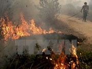Indonesia publica lista de 240 sospechosos de incendios forestales