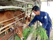 Empeñado Vietnam en elevar línea de pobreza