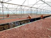Vietnam y Japón cooperan en producción de chocolate