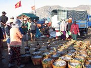 Vietnam adquiere experiencias noruegas en economía marítima