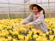 Ciudad Ho Chi Minh promueve cooperación agrícola con Holanda