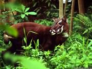 Científicos buscan preservar fauna silvestre en Truong Son