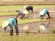 Asistencia canadiense al desarrollo de economía agrícola de Vietnam