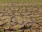 Vietnam y Alemania fomentan lazos en recursos naturales y medio ambiente
