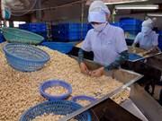 Exportaciones vietnamitas de anacardo lograrán dos mil 500 millones USD