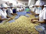 Expertos africanos estudian experiencias vietnamitas en cultivo de anacardo