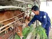 Vietnam anuncia inversión millonaria para construcción de nueva ruralidad