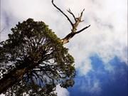 Danzas de bosque en el monte Lao Than