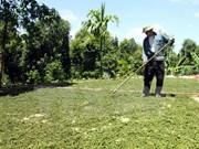 Sur y Sureste de Asia cooperan en desarrollo rural