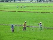 Debaten en Vietnam medidas para elevar la competitividad de productos agrícolas