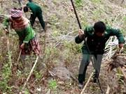 Localidades vietnamita y laosiana cooperan en protección de áreas limítrofes