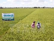 Honran en Vietnam 100 modelos de cultivo agrícola