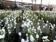 Festival de flores de Da Lat ofrece diferentes deleites