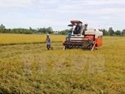Vietnam será un gran productor agrícola en Sudeste Asiático