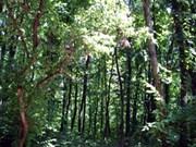Esfuerzos de protección y desarrollo de parque nacional Kon Ka Kinh