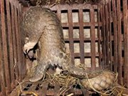 Vietnam y Reino Unido cooperan contra el tráfico de animales y plantas salvajes