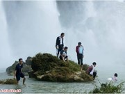 Cortometraje vietnamita rivaliza por galardón Oso de Oro