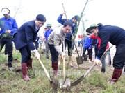 Inician en Hanoi festival de siembra de árboles