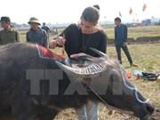 Festival para rezar por buena cosecha en Ha Nam