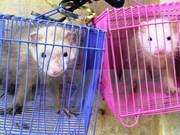 Vietnam suspende comercio de especímenes de especies con Laos