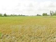Discuten medidas de enfrentamiento al cambio climático en delta del Mekong