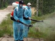 Vietnam aprueba plan nacional contra la fiebre aftosa
