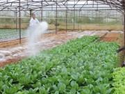 Japón ayuda al desarrollo rural en provincia norteña vietnamita