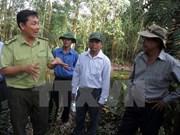 Tay Ninh corre el alto riesgo de incendios forestales